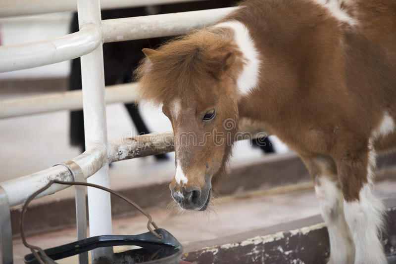 Donkey stock photography
