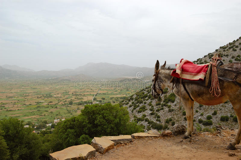 Donkey and Lassithi Plateau view. Crete, Greece royalty free stock images