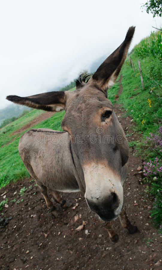 Download Donkey In Meadow Stock Photos - Image: 21186123