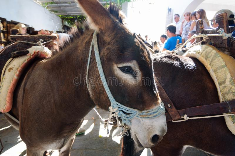 Donkey is the only means of transportation through the streets of Lindos, Greece stock photos