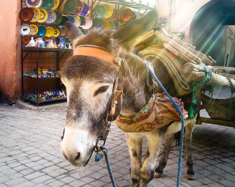 Donkey at Morning Market royalty free stock images