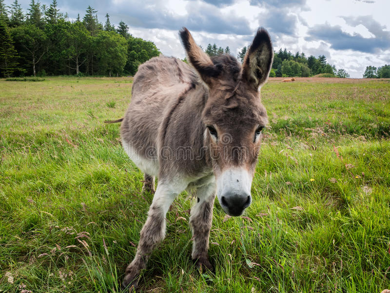 Donkey, nice and cute on a green field stock photos