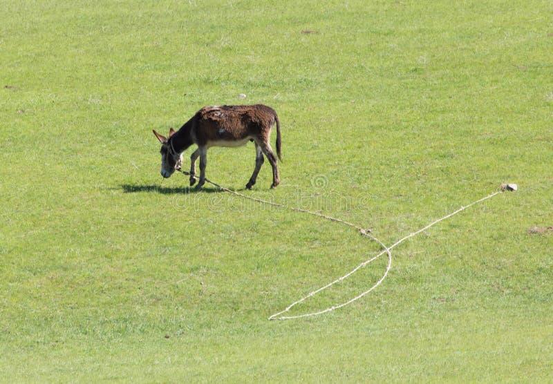 Donkey on pasture stock images