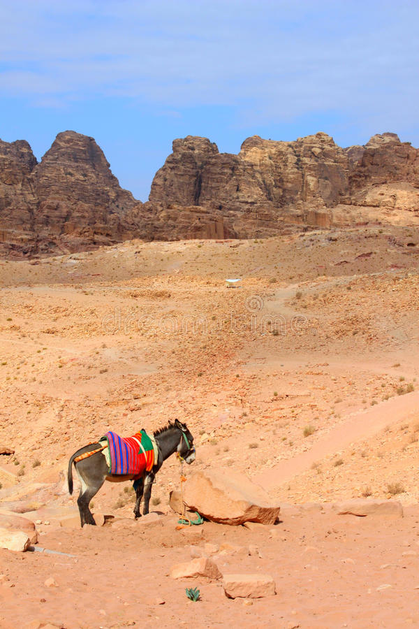 Donkey in Petra, Jordan. Petra is one of the new Seven Wonders of the World stock photography
