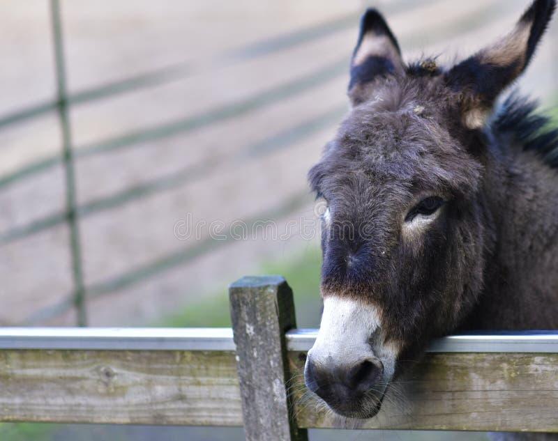 Donkey in public park during autumn season. royalty free stock photo