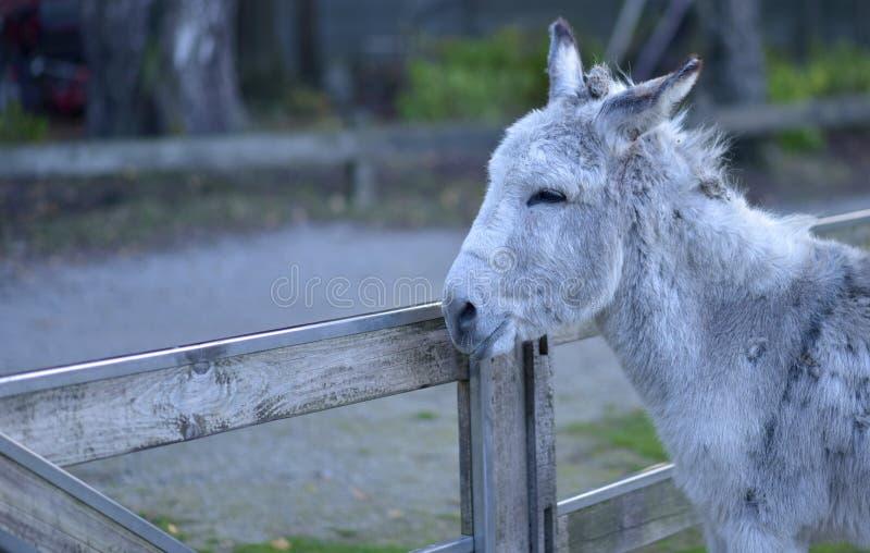 Donkey in public park during autumn season. stock photos