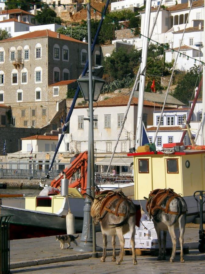Donkey on quay stock images