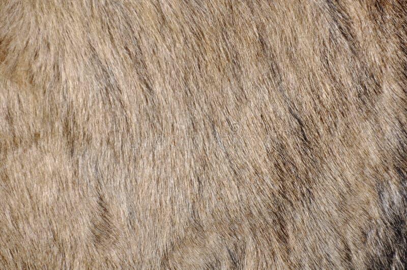 Download Donkey skin stock image. Image of decorative, backdrop - 25505475