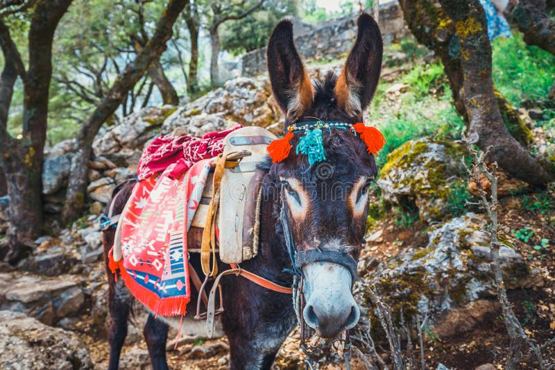 Donkey stands on the mountain path to Zeus Cave Diktaion Andron - Lassithi, Crete. Greece stock photos