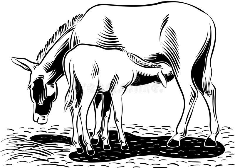 Donkey suckling her puppy. A donkey with her little puppy, in a stable stock illustration