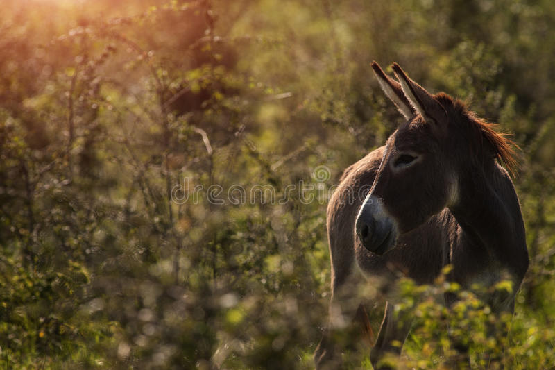 Donkey in a tall grass royalty free stock photography