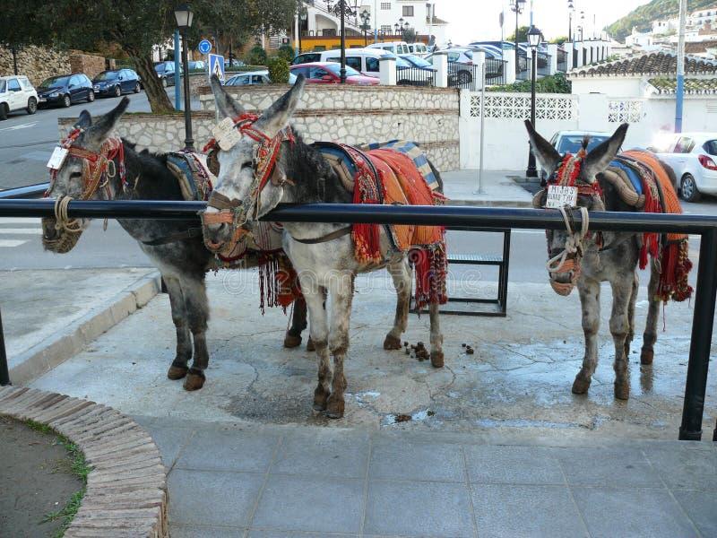 Donkey taxi in Mijas stock photography