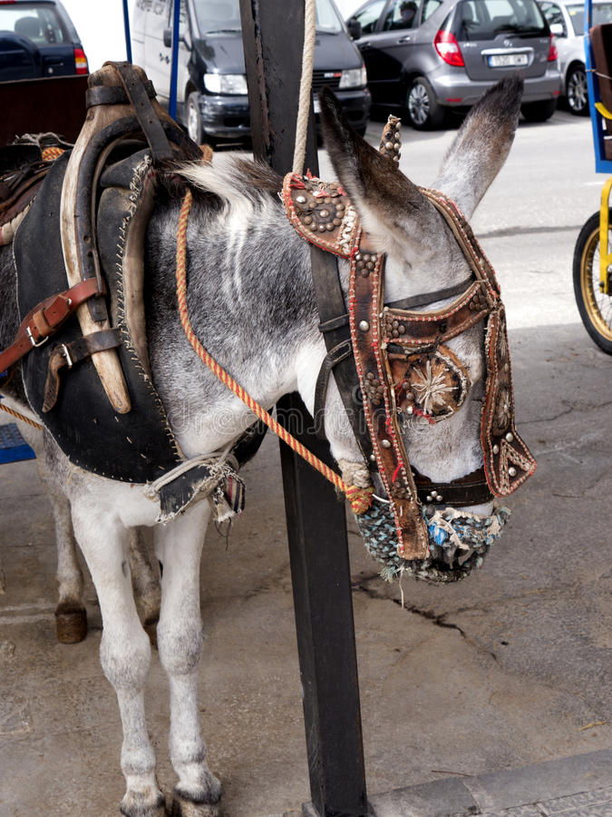 Donkey Taxis in Mijas one of the most beautiful 'white' villages. Mijas in Southern Spain area called Andalucia.It is in the Alpujarra mountains above the coast royalty free stock photography