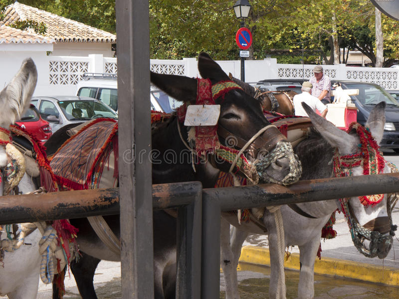 Donkey Taxis in Mijas one of the most beautiful 'white' villages. Mijas in Southern Spain area called Andalucia.It is in the Alpujarra mountains above the coast royalty free stock images