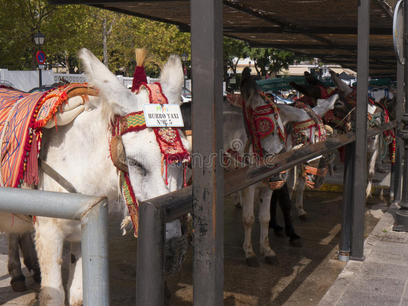 Donkey Taxis in Mijas one of the most beautiful 'white' villages. Mijas in Southern Spain area called Andalucia.It is in the Alpujarra mountains above the coast stock photo
