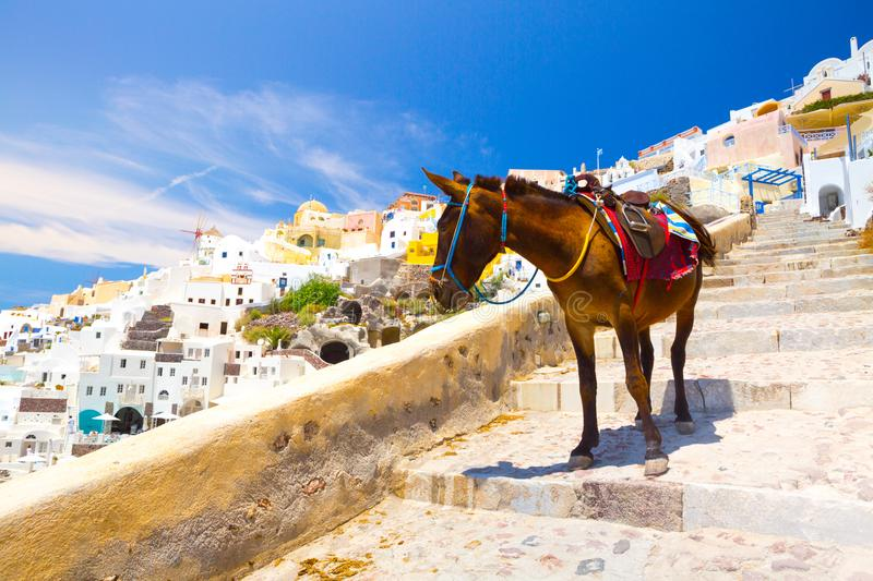 Donkey taxis in Santorini, Greece. Donkey taxis in Santorini Island, Santorini, Greece stock photo