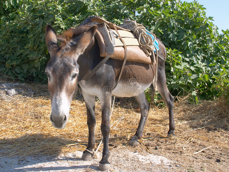 Donkey at work royalty free stock photo
