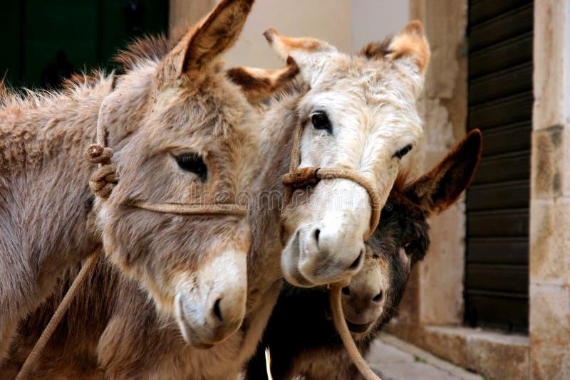 Download Donkeys stock image. Image of animals, country, donkey - 14479687