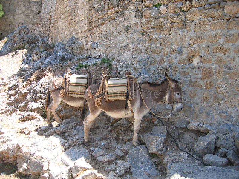 Download Donkeys stock photo. Image of waiting, weary, show, tired - 464148