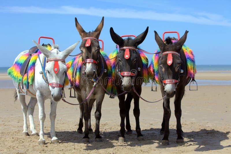 Download Donkeys at a beach resort stock image. Image of resort - 14996173