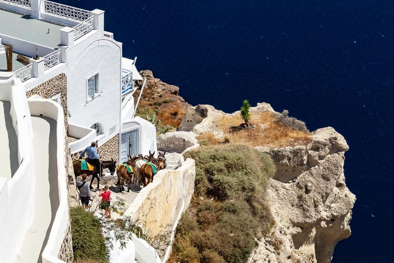 Donkeys descending stairs in Oia Santorini Greece. Donkeys descending stairs in the city Oia, Santorini, Greece stock images