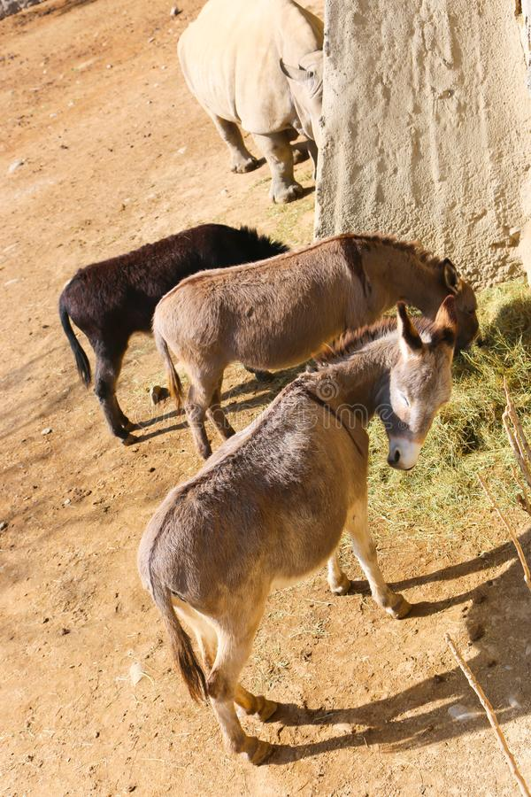 Beautiful donkeys in park royalty free stock photo