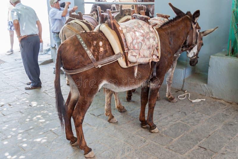 Donkeys Lindos Rhodes Greece. Donkeys in Lindos, Rhodes Island, Greece royalty free stock images