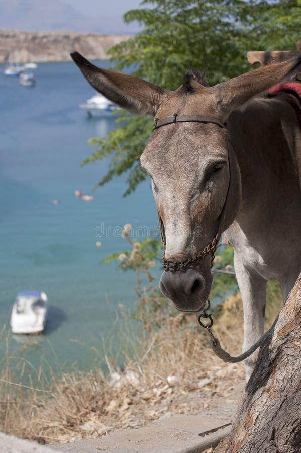 Donkeys Lindos Rhodes Greece. Donkeys Lindos Rhodes Island Greece royalty free stock images