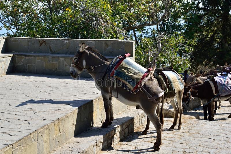 Donkeys taxi, Dodecanese Greece. Donkeys taxi, Lindos, Rhodes island, Dodecanese islands, Greece stock image