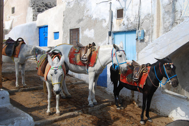 Download Donkeys Waiting Passengers At The Port Of Fira Stock Image - Image: 24761095
