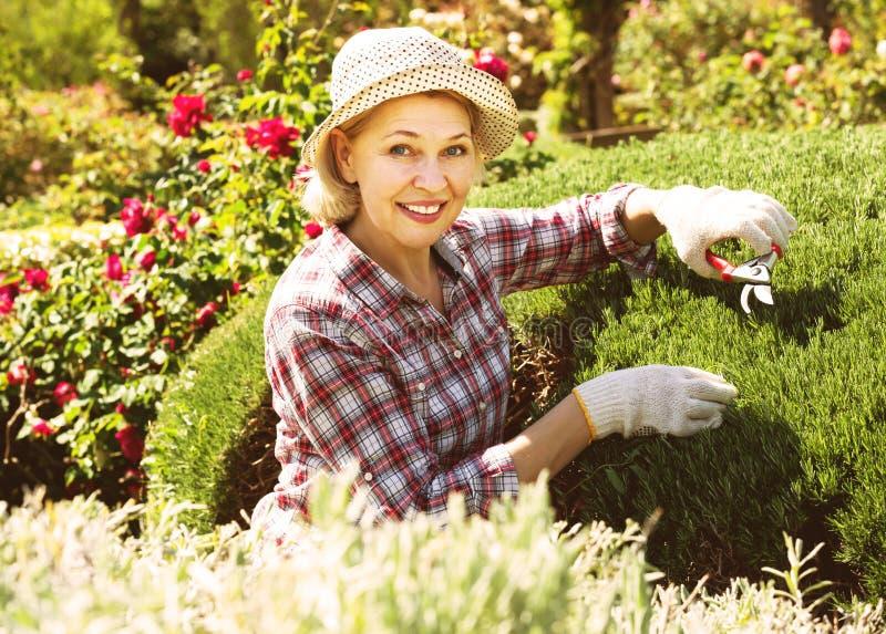 Donna allegra impegnata in cespugli di giardinaggio fotografie stock