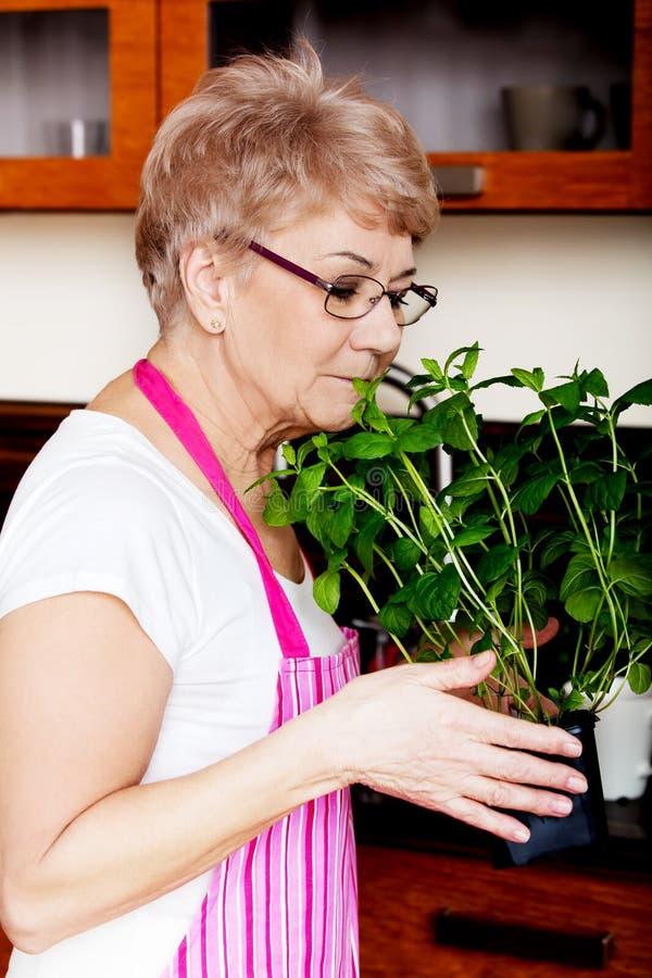 Donna anziana che odora la sua pianta della menta a casa nella cucina fotografia stock libera da diritti