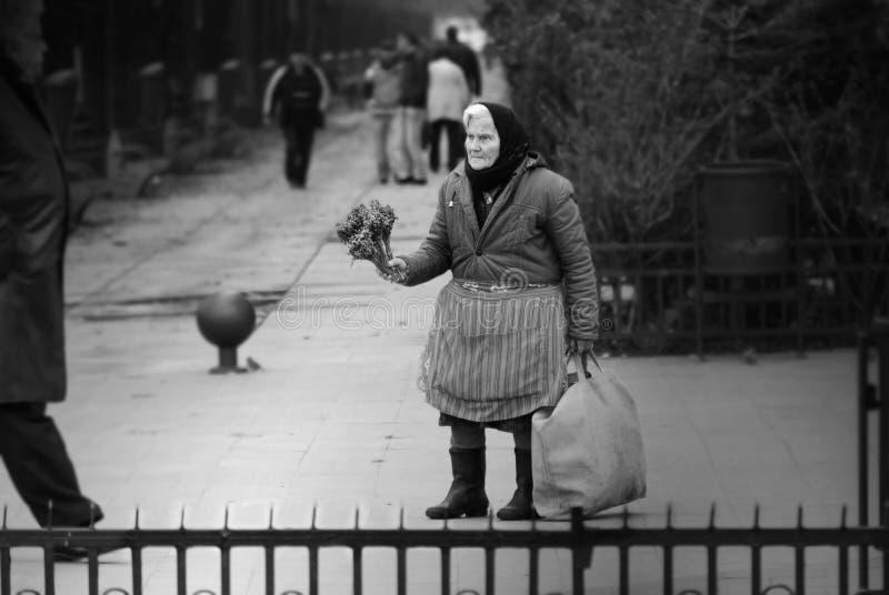 Donna anziana povera che vende i fiori secchi sulla via fotografie stock