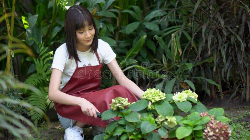 Donna asiatica attraente nel giardiniere del grembiule che pianta i fiori in giardino giovane giardinaggio del fiorista fotografia stock libera da diritti