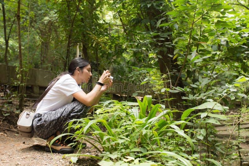 Donna asiatica che prende le foto nella foresta di autunno fotografia stock