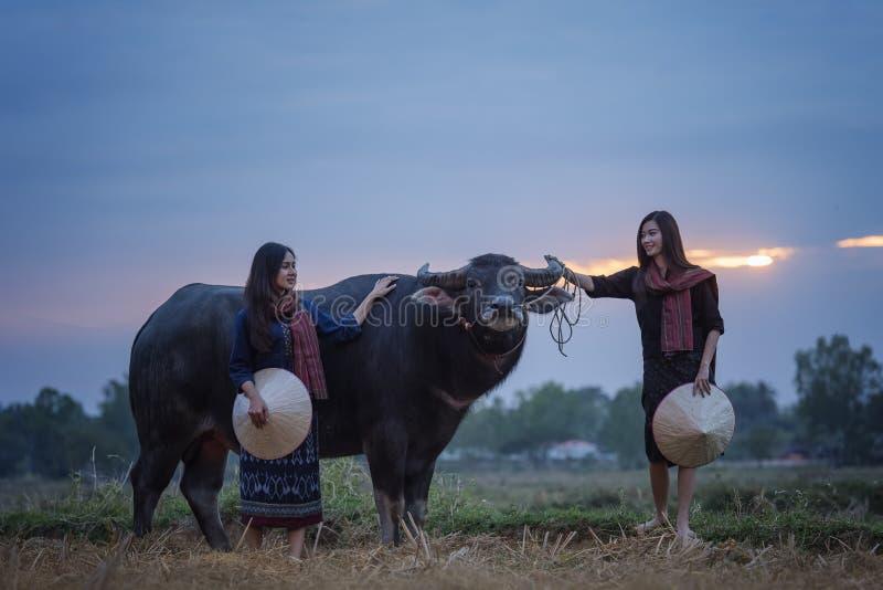 Donna asiatica con un bufalo fotografie stock