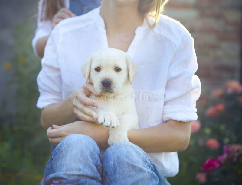 Donna in blusa bianca con il cucciolo di labrador che si siede sul suo ginocchio immagini stock