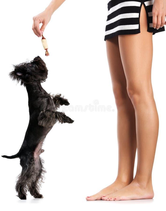 Donna, cane e dolce fotografia stock libera da diritti