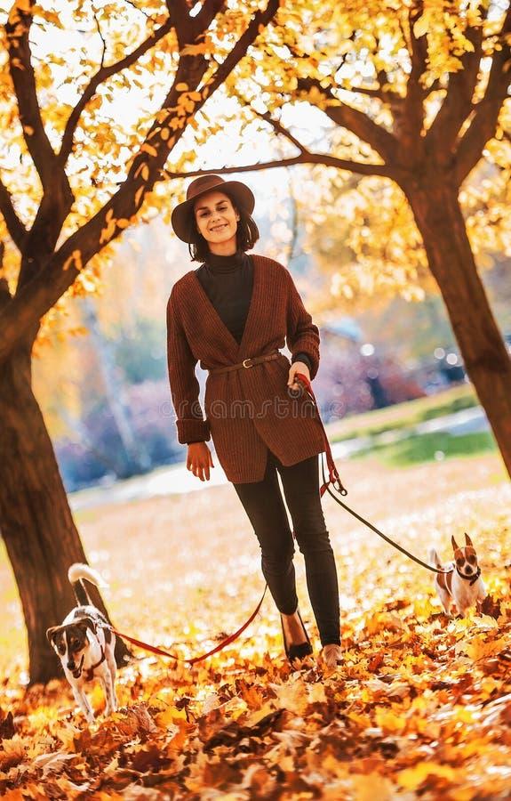 Donna che cammina con i cani all'aperto in autunno immagini stock