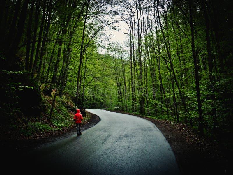 Donna che cammina il percorso attraverso la foresta fotografia stock libera da diritti