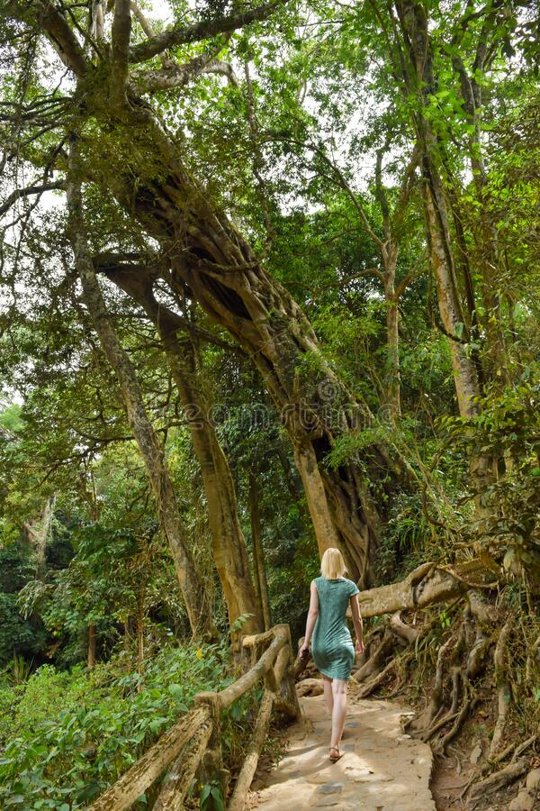 Donna che cammina nella giungla fotografia stock libera da diritti