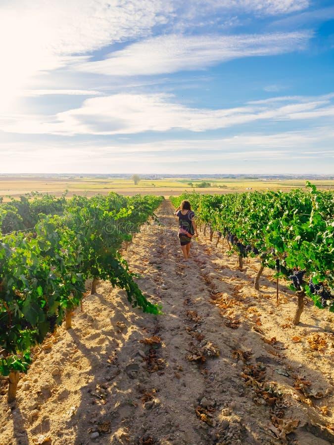 Donna che cammina nella vigna spagnola fotografia stock