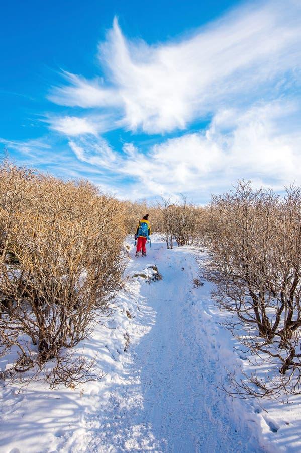 Donna che cammina sulla traccia con neve in montagne fotografia stock libera da diritti