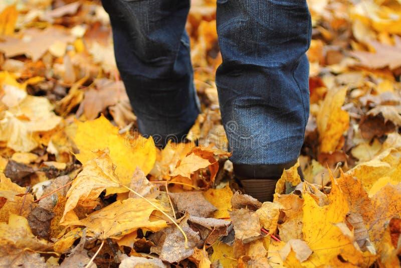 Donna che cammina sulle foglie immagini stock libere da diritti