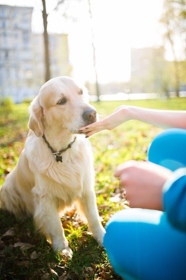 Donna che dà ossequio al cane fotografia stock libera da diritti