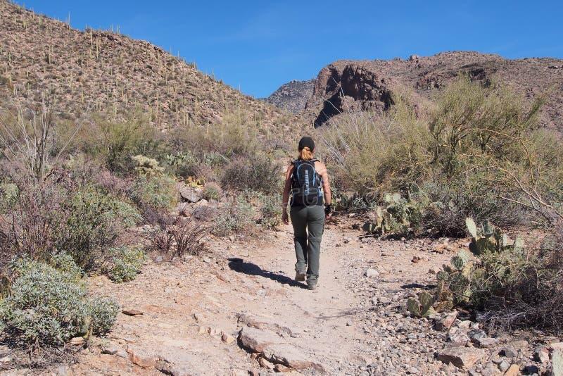 Donna che fa un'escursione la traccia del canyon di Pima, Arizona immagine stock libera da diritti