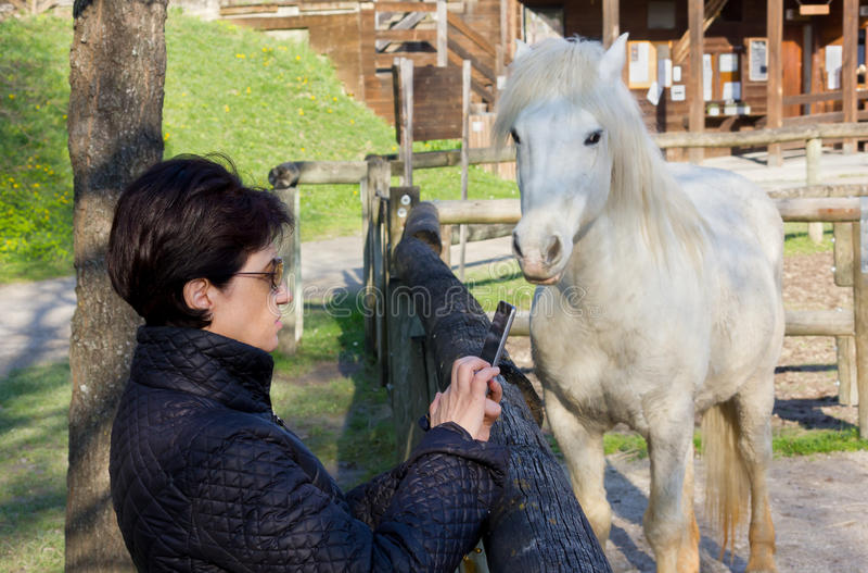 Donna che fotografa un cavallo bianco dietro un recinto di legno immagini stock libere da diritti