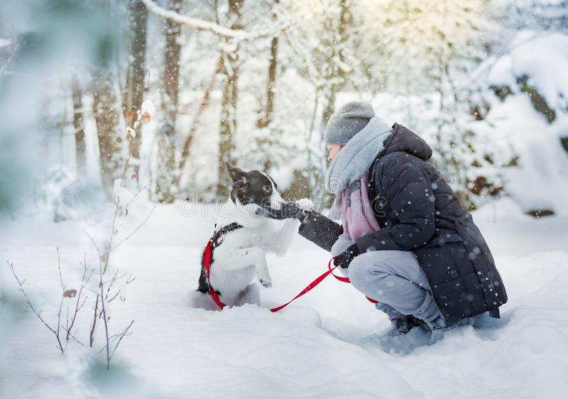 Donna che gioca con il cane in foresta nevosa fotografia stock libera da diritti