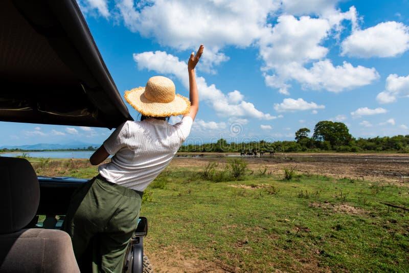 Donna che gode della vista dal camion di safari fotografie stock
