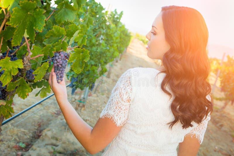 Donna che gode di una passeggiata nella vigna dell'uva immagine stock